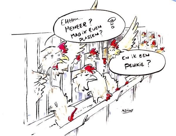 Cartoon van kippen die een pauze willen